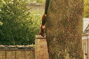 Gespot: eekhoorn in de buurt